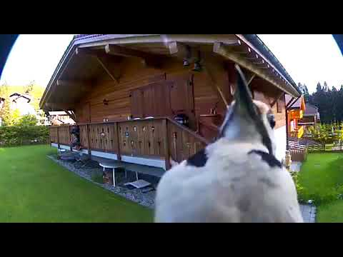 Woodpecker pecking at security camera