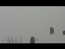 Каргополь.Река Онега в тумане.Перелетные птицы в тумане 9499