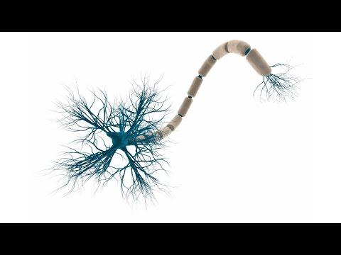 5. Нервная система - клеточное строение (8 класс) - биология, подготовка к ЕГЭ и ОГЭ 2017