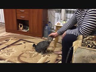Жорик -пес