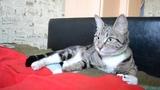 Кошка Ася. 89144209489
