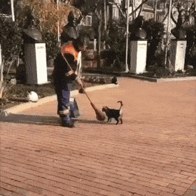 Street sweeper making sure to get all the important places - Create, Discover and Share Awesome GIFs on Gfycat