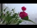 Ванечка цветёт что ему минус 22 весна же