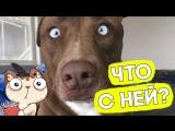 Собака с самыми смешными глазами в мире!