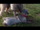Пёс Тотоша со Стеффани, подружкой детства (она же Тиффани)