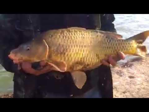 4 5 kg lık saan balığı avı