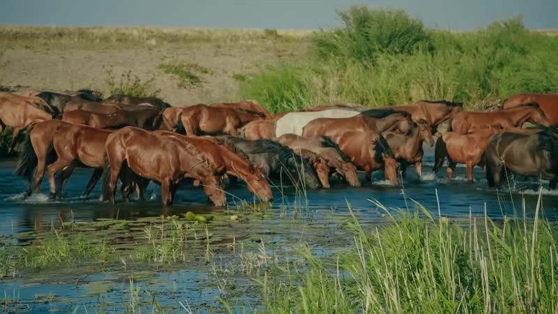 Презентационный фильм крестьянского хозяйства QAZAQ ASYLDARY для зарубежных партнеров » Freewka.com - Смотреть онлайн в хорощем качестве