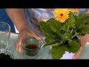 УДОБРЯТЬ или НЕ УДОБРЯТЬ комнатные растения Когда подкормка может повредить цвет