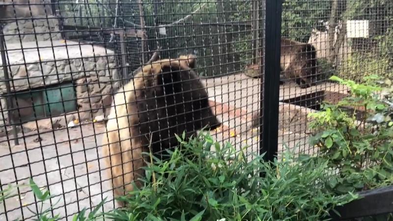 Ялтинский в зоопарк