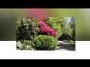 прикосновение цветущего сада