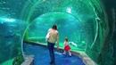 Baby Shark Dance Video for kids Nursery Rhymes Kate in jungle