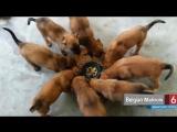 Большие кучи милоты )))
