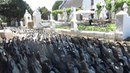 Винодельня Vergenoegd в городе Стелленбош ЮАР наняла на работу более 1000 уток