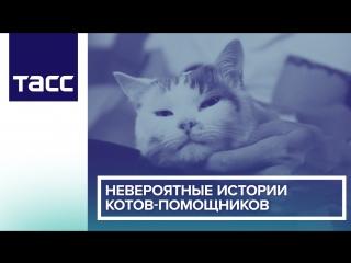 Невероятные истории котов-помощников