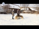 На собаках через перевал Дятлова