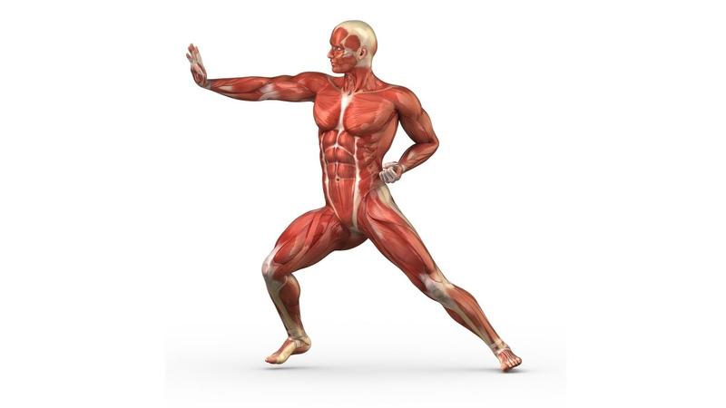 9 Опорно двигательная система мышцы 8 класс биология подготовка к ЕГЭ и ОГЭ 9 jgjhyj ldbufntkmyfz cbcntvf vsiws 8
