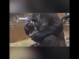 Пополнение в вашингтонском зоопарке