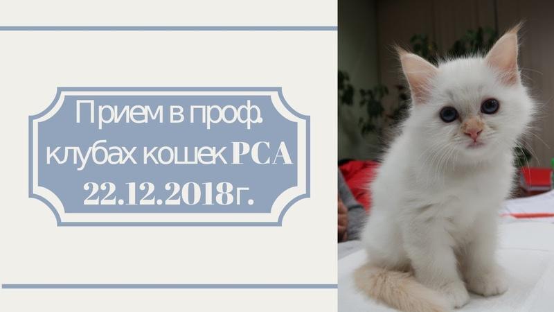 Прием в проф. клубах кошек PCA 22.12.2018г