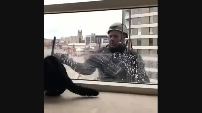 и окна помыл и с котиками поиграл