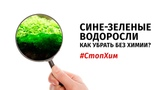 #СтопХим Сине-зелёные водоросли в аквариуме. Как избавиться от водорослей без химии