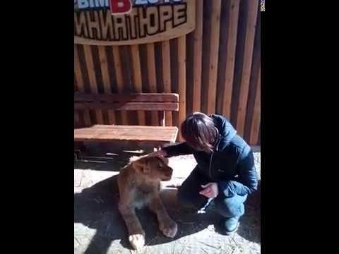 Бахчисарайский парк миниатюр. Игры со львятами (14.02.19)