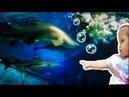 Прогулка по Океанариуму с Есенией под веселые детские песенки VLOG/Childrens songs in English