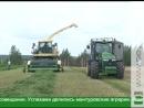 В приоритете у курских аграриев производство молока и говядины