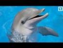 Самые веселые дельфины