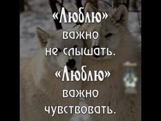 Как кормить своего белого волка? Красивая песня по мотивам известной притчи.