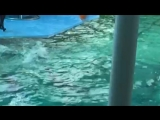 Дельфинарий на Крестовском 2
