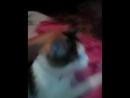 Моя котейка
