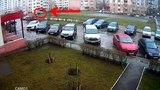 В Липецке кота выбросили с девятого этажа на