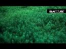 Black Cube Rec Kano Tree Of Life