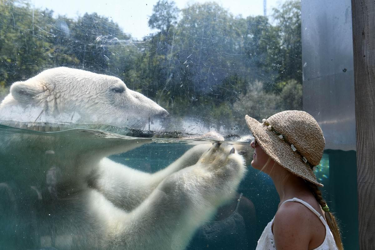Иди ко мне! Поплаваем: Девушка и белый медведь