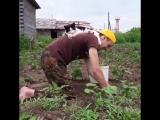 Ничего необычного, просто котик помогает хозяину на даче