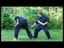 Wing Chun Butterfly Swords Vol. 1: Ip Man Lineage Form (BONUS)