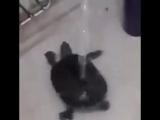 Ничего необычного, просто черепашка принимает душ