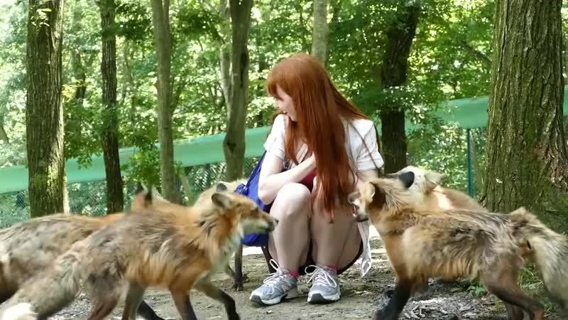Fox Village in Zao Japan 蔵王きつね村・kitsune mura