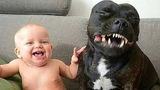 Pit Bull Protects Baby Compilation