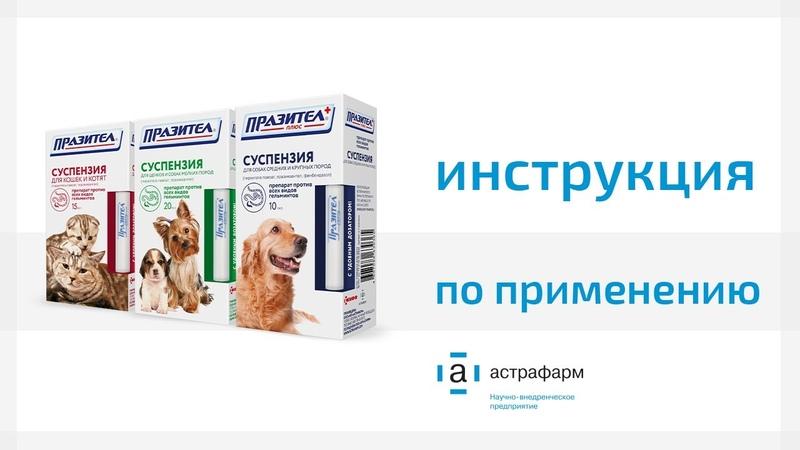 Празител - суспензия от глистов для кошек и собак: инструкция по применению