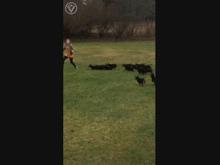 Жестокое нападение стаи щенят на беззащитную девушку