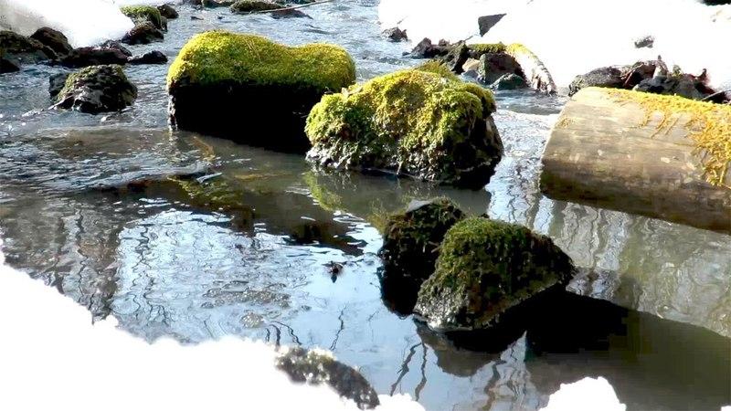 Весенняя река в лесу, журчание воды