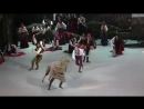 (3) Paquitas funny Horse Пахита, потешная лошадь, Акт I