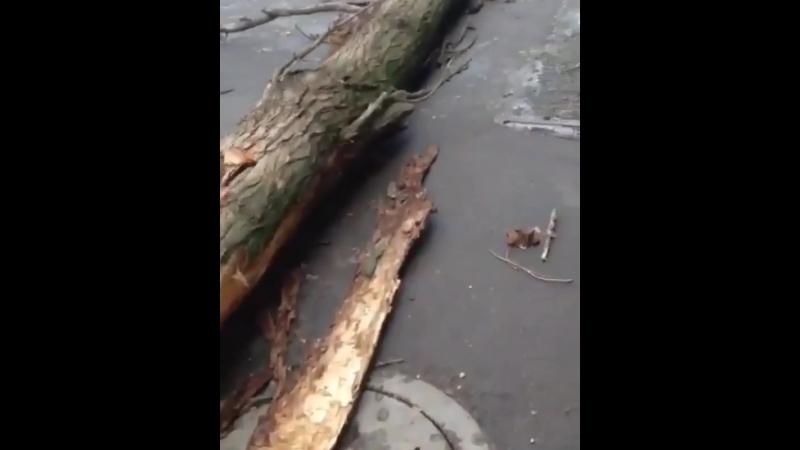 Дерево упало на жилой дом на Тупалева - 21.03.18 - Это Ростов-на-Дону!