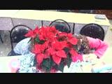 Видео группы movers п.ур.4 (Don't eat a Poinsettia)