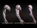 Скульптинг мужских рук в ZBrush