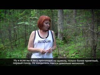 Какие ещё растения можно есть в лесу? Не сидится на месте Часть 2