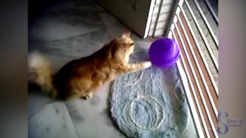 Коты vs Bоздушные шарики 🎈