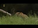 Глаз леопарда (2006)