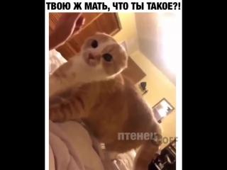 Твою ж мать, что ты такое! / юмор ТОРТ-РЕЦЕПТ-VК